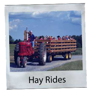 Hay Rides at Steed's Dairy