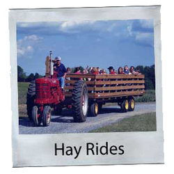 Hay Rides at Steed's Dairy