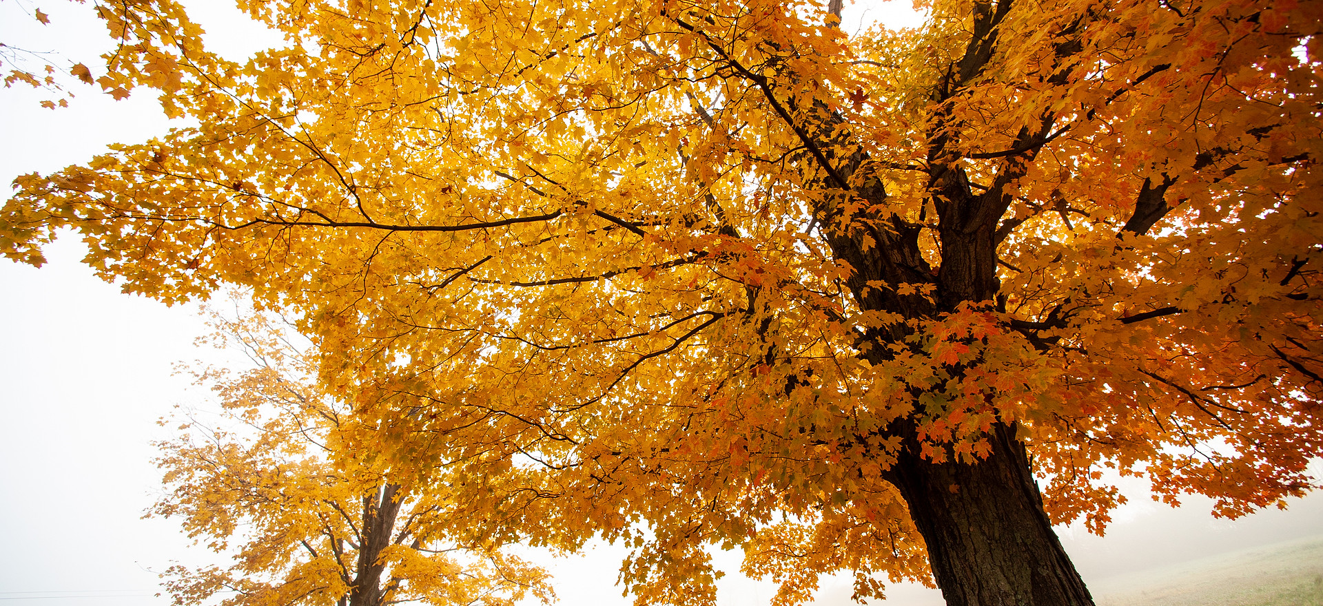 Deer Run Fall Image.jpg