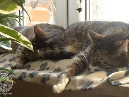 Zasypianie podczas medytacji