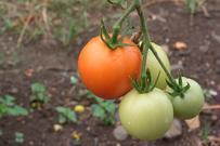Boletim da Conab apresenta cenários e perspectivas para agricultura familiar