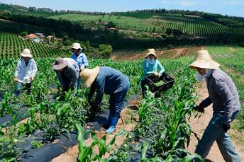Projeto cria linha de crédito para pequenos e médios produtores rurais