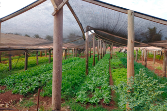 Agraer visita produção de hortaliças em estufas, com energia solar e biodigestor em Coxim