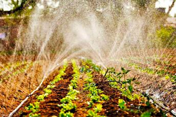 Dia do agricultor: assistência técnica e ações do Governo fortalecem a produção do campo