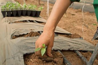 Cursos de capacitação estimulam cooperativismo para agricultores familiares
