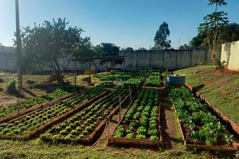 UNEI Dom Bosco cultiva horta com mudas fornecidas pela Agraer/Ceasa