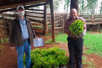 Agraer de Ponta Porã atende produtor da Cadeia Produtiva da Erva-Mate na Região Sul Fronteira de MS