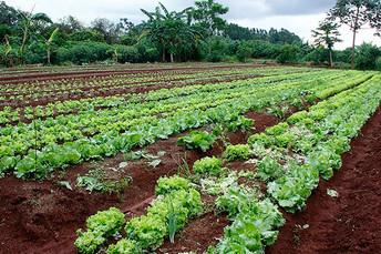 Em momento crítico da pandemia, ações incentivam a produção de alimentos