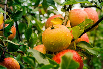 Em ano de pandemia e isolamento social, exportações de frutas crescem 6% em volume