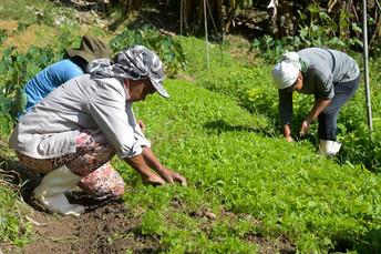 Comissão de Agricultura aprova projeto que destina 5% do Funrural para Ater