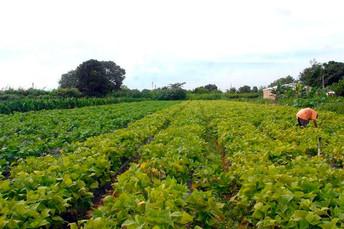 Governo altera definição de agricultor familiar