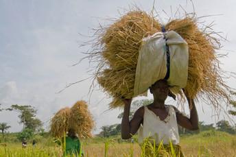 Agricultura familiar produz mais de um terço dos alimentos no mundo