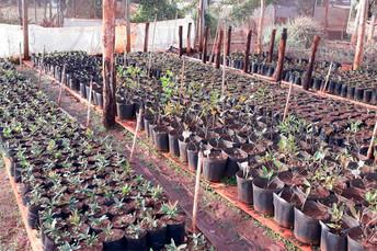 Mudas de guavira produzidas no Cepaer são entregues para a Prefeitura de Naviraí