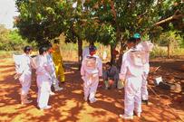 Agraer ministra curso básico de apicultura na Aldeia Ofaié em Brasilândia