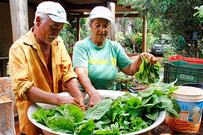 Projeto Hortas Urbanas: casal planta hortas e cria agrofloresta na Capital