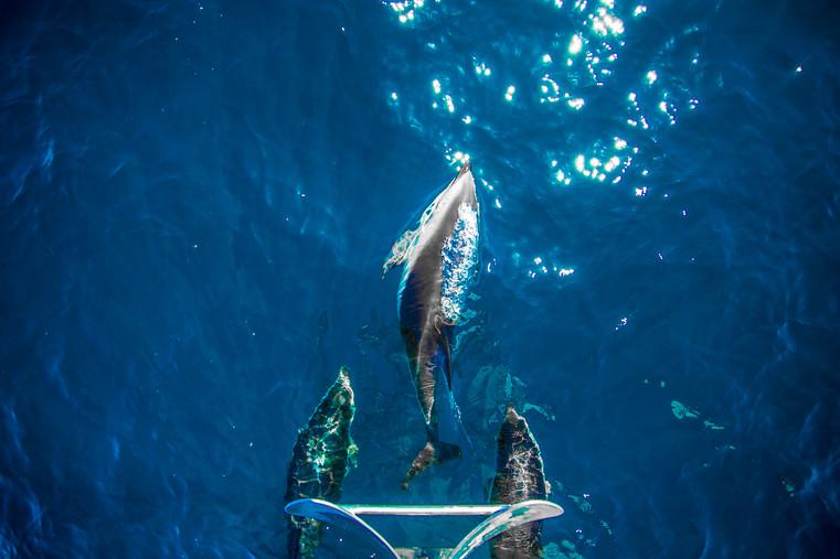 delfinosLARGE-2.jpg