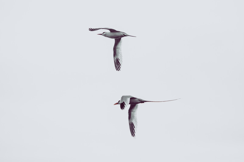 bvp_Bermuda_birds-9523.jpg