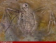 Nephilim Fossil - The Chronicles of Enoch