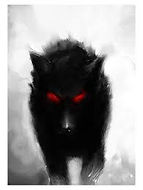 Wolf Shadow - The Chronicles of Enoch
