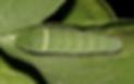 Screen Shot 2020-03-20 at 10.52.55 AM.pn