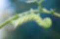 Screen Shot 2020-03-20 at 7.59.27 PM.png