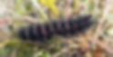 Screen Shot 2020-03-20 at 11.56.32 AM.pn