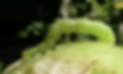 Screen Shot 2020-03-20 at 10.58.56 AM.pn