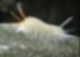Screen Shot 2020-03-15 at 6.26.15 PM.png