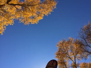 Fall in FoCo!