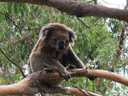Wildlife Spotting on Australia's Phillip Island