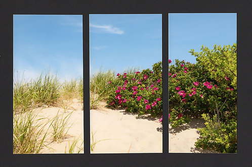 WT6 Dune Roses Triptych