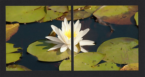 WD60 Lily Diptych