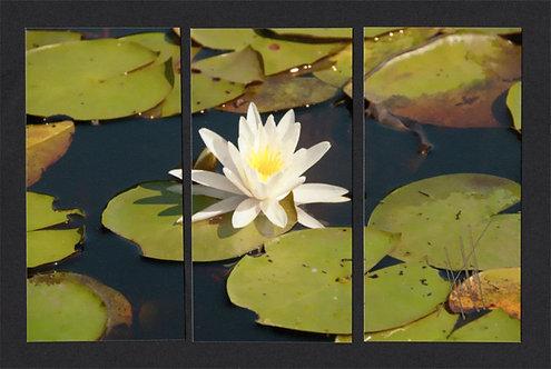 WT60 Lily Triptych