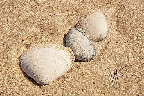 W32F White Sands
