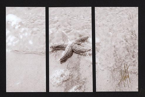WT101 Single Sea Star Sepia Triptych