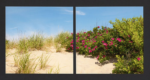 WD6 Dune Roses Diptych