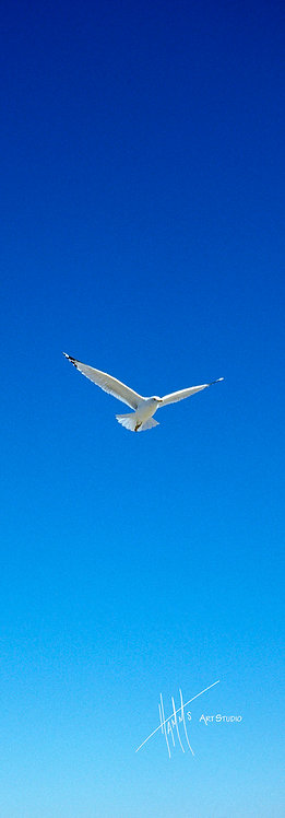 A26P Blue Sky