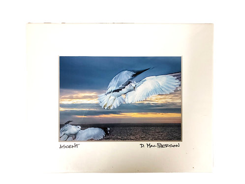 Donna MacPherson Print