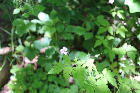 Zarte Blume by Ursi.JPG