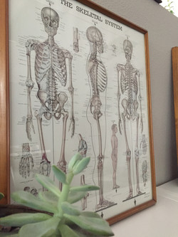 Anatomy Picture