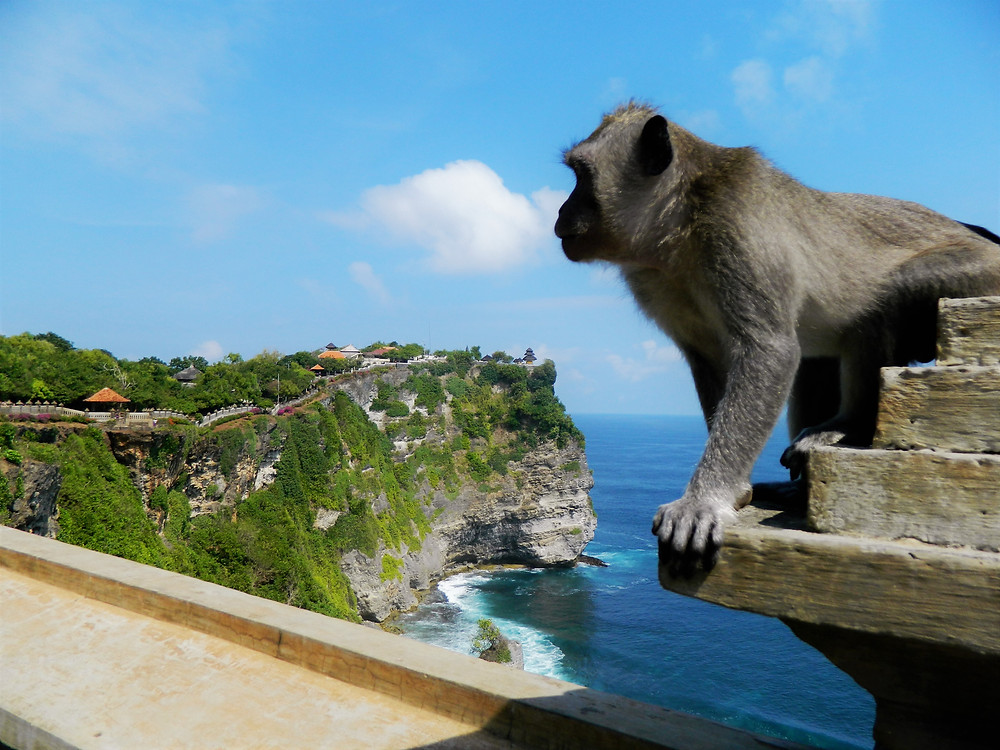 Monkey at Uluwatu Temple, Indonesia