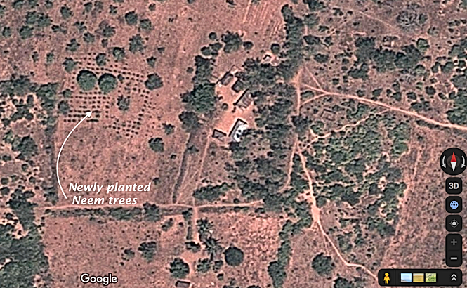 Newly planted neem trees - satellite imagery