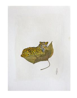 Leopard leaf 1
