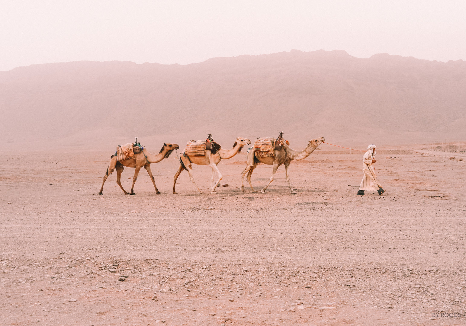 Camel trekking the Sahara, Morocco