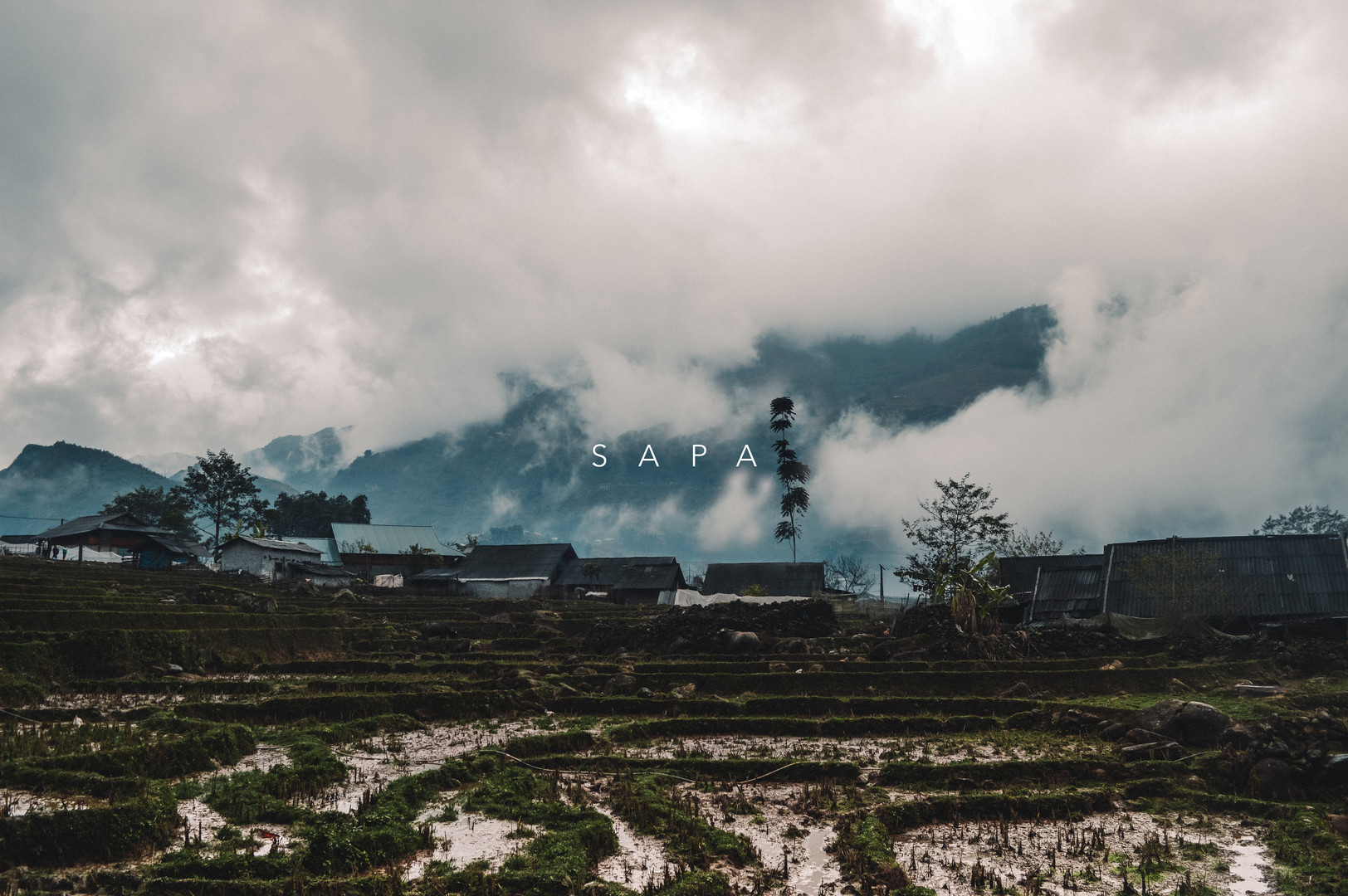 Rice Fields of Sapa