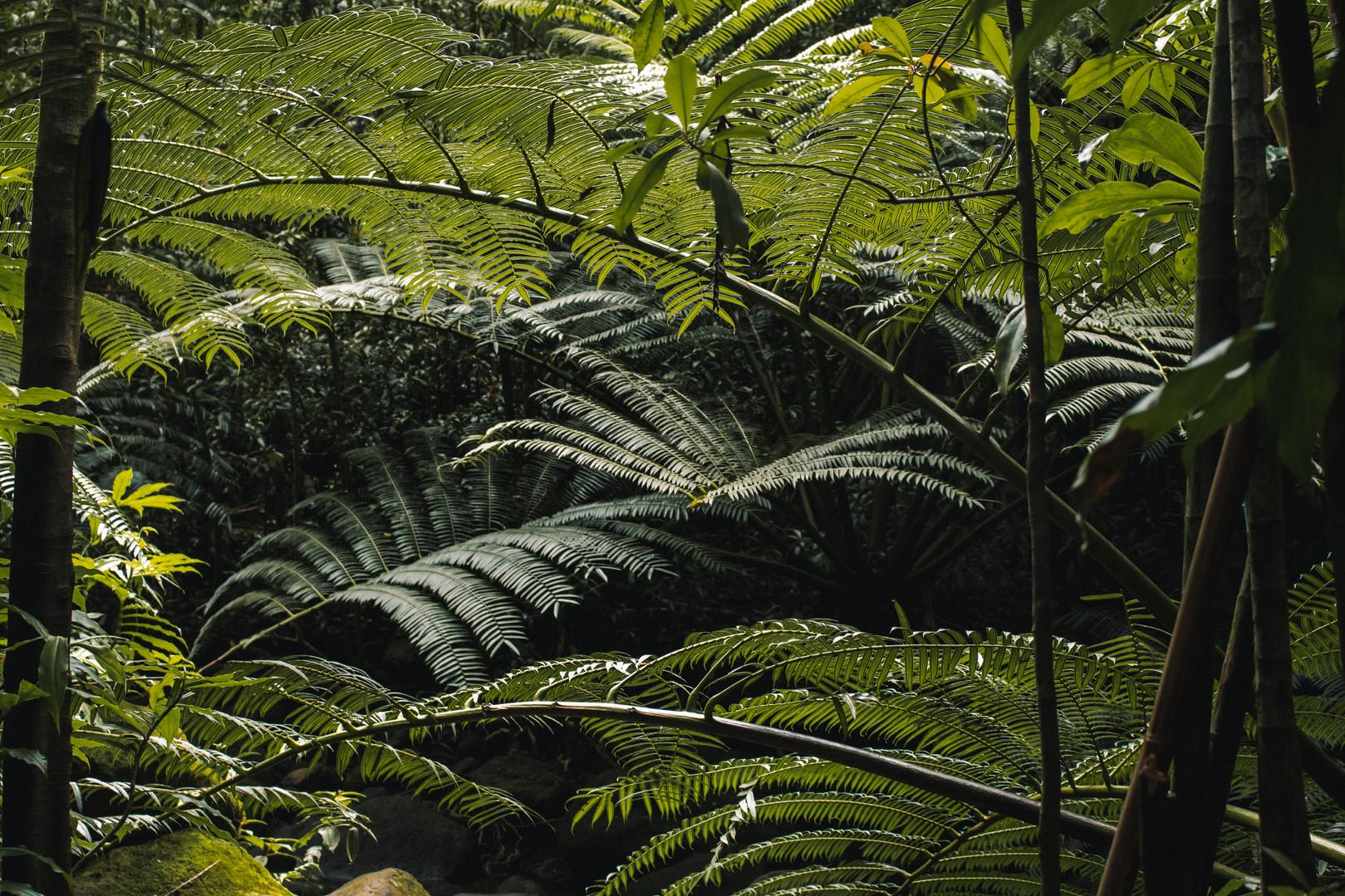 Manoa Trails