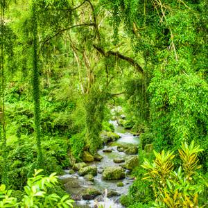 Tropical Landscape Art Photographs
