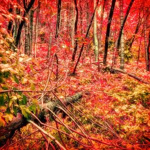 Seasons Art Photographs