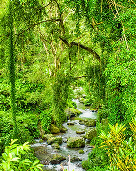 Lush Green Tropical Landscape in Bali In