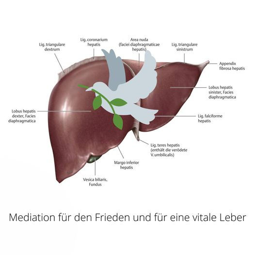 Lebermeditation Bild.jpg